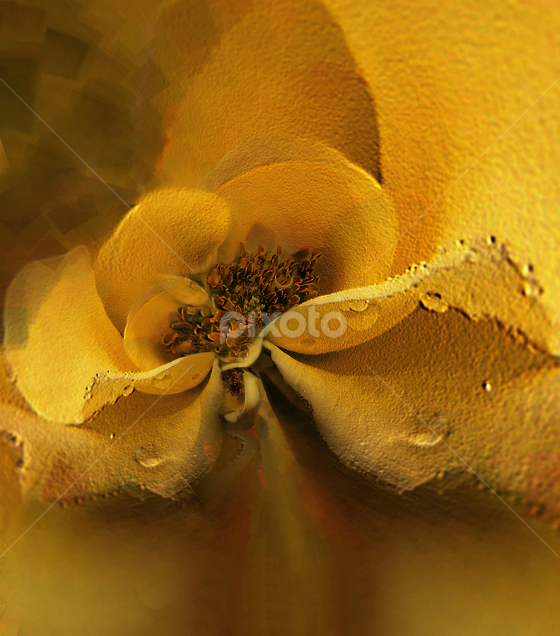 LONGING by Carmen Velcic - Digital Art Abstract ( abstract, roses, yellow, flowers, digital )
