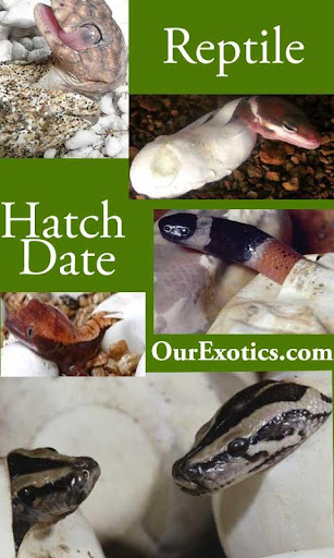 Hatch Date