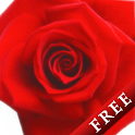 Rose Free