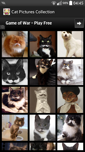 Cat Pictures Collection