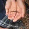 (Eastern) Red Back Salamander