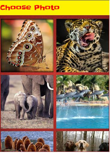 【免費解謎App】animals Picture Puzzle-APP點子