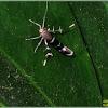 Twirling Cosmet Moth