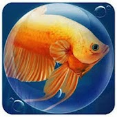 Dream Fish Seasons