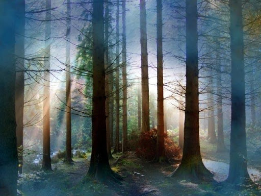 【免費攝影App】Forest Wallpapers II-APP點子
