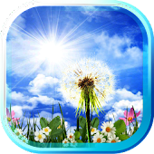 Dandelions HD live wallpaper