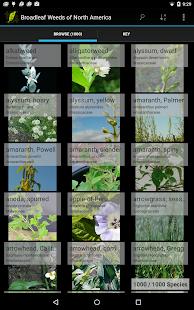 1,000 Weeds of North America - screenshot thumbnail