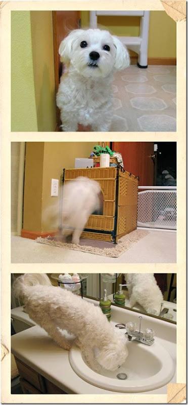 Dog Hates Carrot Cake Gif