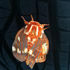 Regal Moth