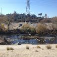 Los Angeles River Wildlife (Sunnynook Bridge)