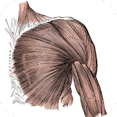 Anatomy: Atlas of Muscles
