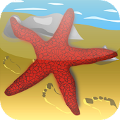 Starfish Game