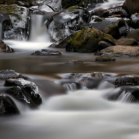 by Larry Rogers - Nature Up Close Water