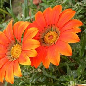 Duet by Vikas Jorwal - Flowers Flowers in the Wild (  )