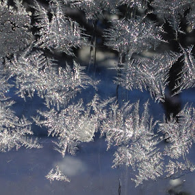 Frost on the Window by Bonnie Lea - Instagram & Mobile iPhone