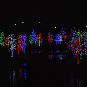 Christmas by the lake by Tracey Knight - Public Holidays Christmas ( texas, trees, lake, landscape )