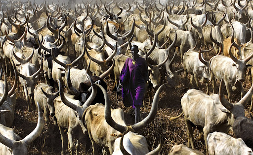 Dinka Herder in Purple