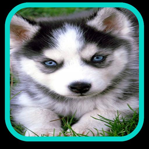Cute Puppy Husky Puzzle LOGO-APP點子