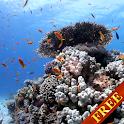 Sea fish Video Live Wallpaper icon