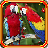 Parrots Love live wallpaper