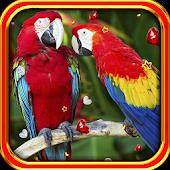 Parrots Love live wallpaper