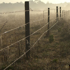Foggy Fenceline by Rich Eginton - Artistic Objects Industrial Objects ( fence, fog, florida, barbed wire, fence posts, , vertical lines, pwc )