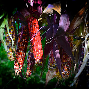 Indian Corn by Nina VanDeleur - Artistic Objects Other Objects ( indian corn )