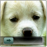 Dog Go Launcher EX Locker icon