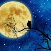 月夜 ライブ壁紙