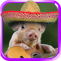 Talking piggy. Funny app icon
