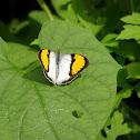 White Orange Tip
