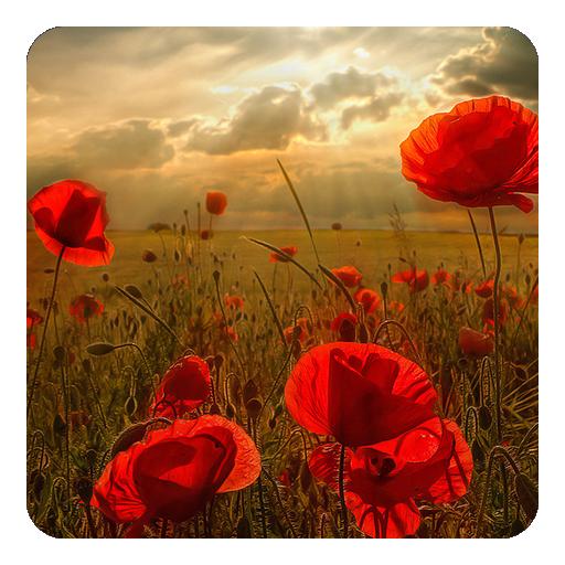 花は壁紙を生きる 個人化 App LOGO-硬是要APP