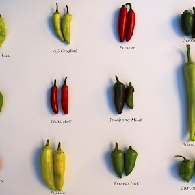 Chilies from My Garden by Arvind Mallya - Typography Captioned Photos ( chilies, hot pppers, 2012, cooking, my garden )