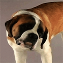 Dog Licks Live Wallpaper icon