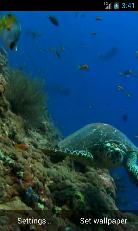 Sea Turtle. Live wallpaper.- screenshot