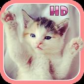 Cute Kitten & Puppy Sounds HD