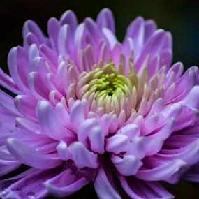 by Jon Kowal - Flowers Single Flower