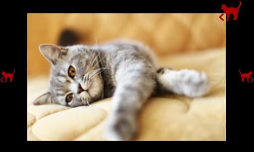 無料休闲Appの赤ちゃんのための猫と活動|記事Game