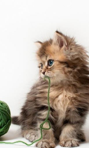 새끼 고양이는 라이브 배경 화면