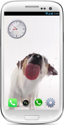 Dog Licks Screen wallpaper