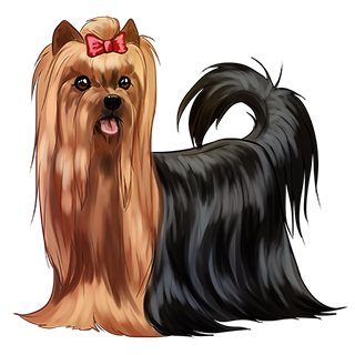 WS: Yorkshire Terrier