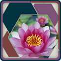 HexSaw - Petals icon