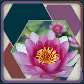 HexSaw - Petals