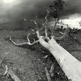 Outback Australia  by Diane Hallam - Landscapes Weather ( stormy, australia, weather, outback, storm, landscape,  )