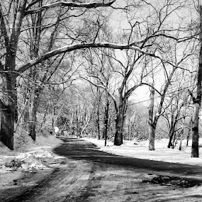 Snowy road home in Pennsylvania by Dianne Collins - Landscapes Weather