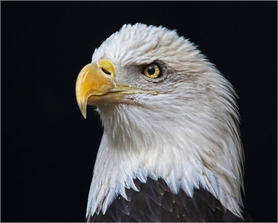 His Majesty by Dennis Bartsch - Animals Birds