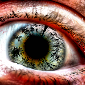 An Eye On The Forest by Simon Eastop - Digital Art Abstract ( pupil, trees, forest, reflective, eye,  )