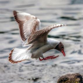 by Eddie Leach - Animals Birds (  )