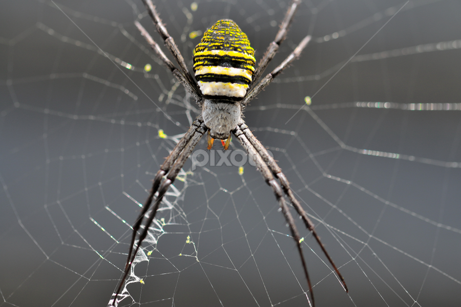 by Antonio Kantod - Animals Insects & Spiders (  )