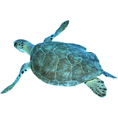 Seaturtle Sticker